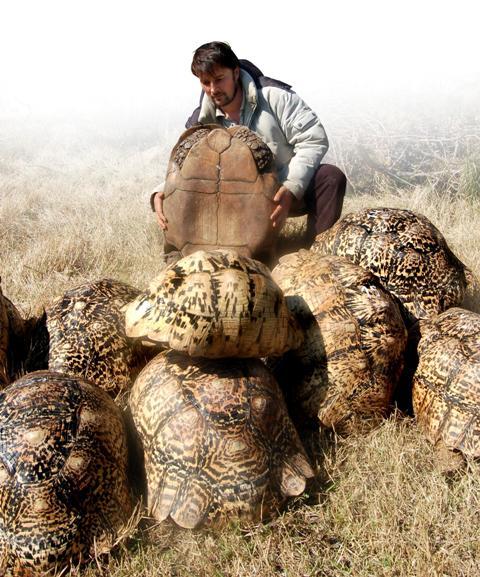 Tartarughe terrestri come allevarle for Terrario per tartarughe in giardino